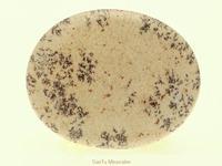 Dendriet jaspis