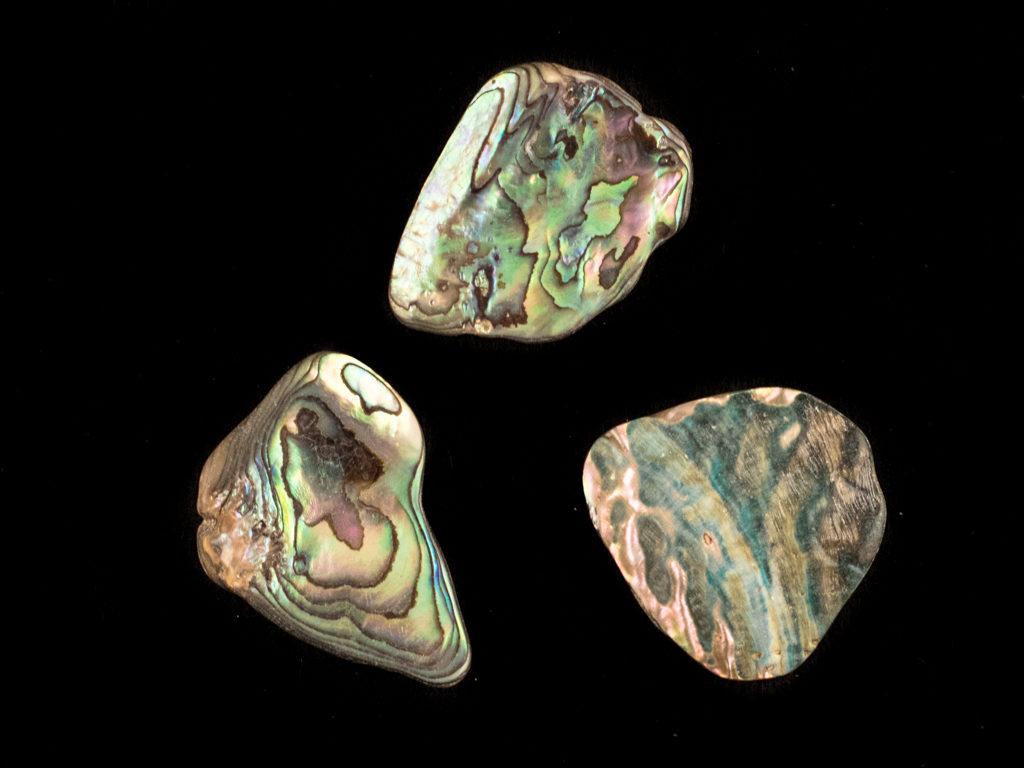 paua opaal