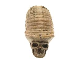 ammoniet schedel
