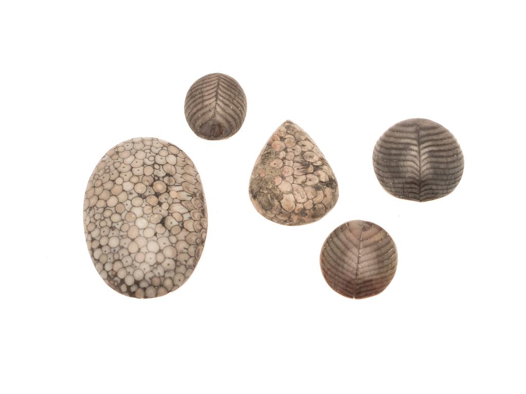 versteend of fossiel slangenhuid